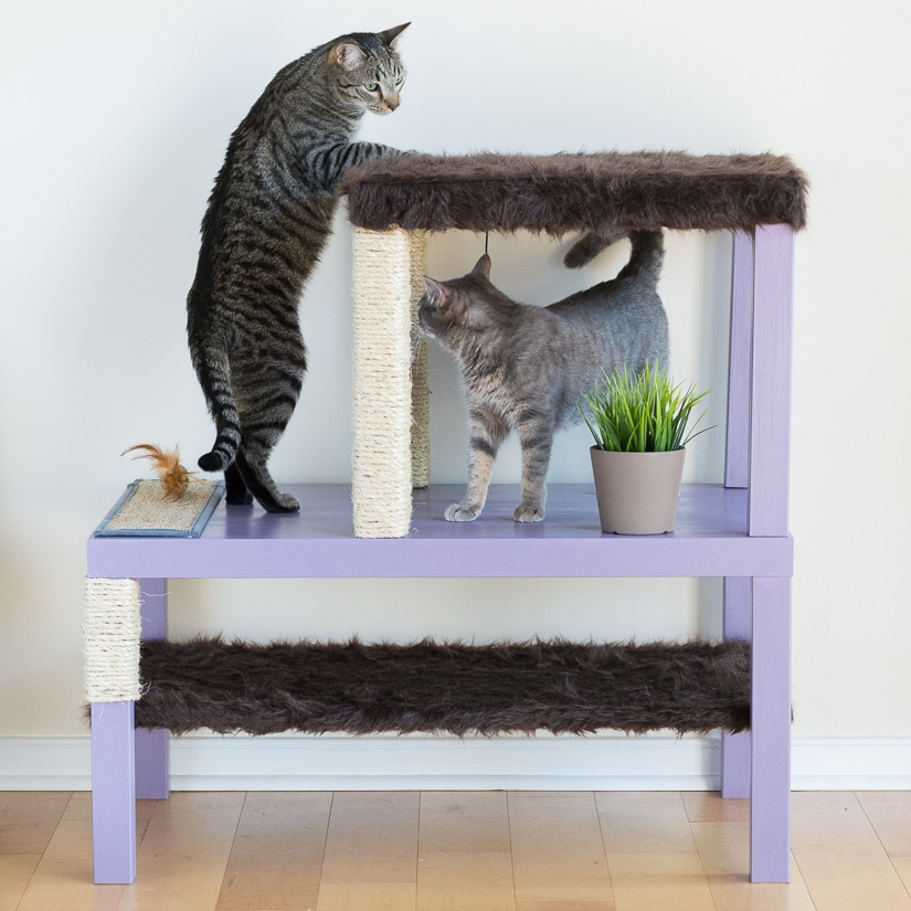 Make a cat tree using real branches my amazing diy cat tree make a homemade cat condo solutioingenieria Gallery