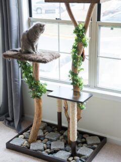 DIY cat tree made from real branches