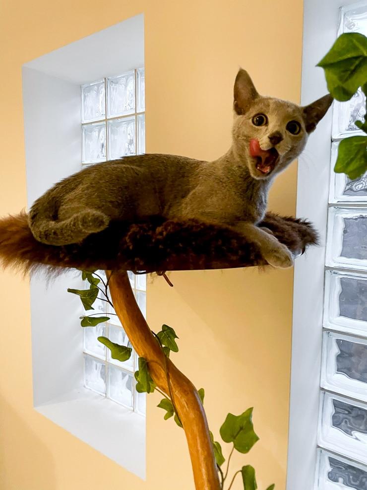 cute kitty on a DIY cat tree