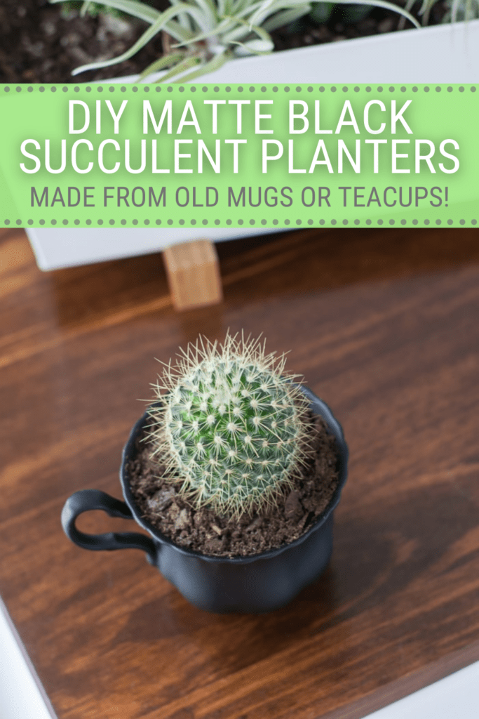 succulent in a black painted teacup with text DIY matte black succulent planters made from old mugs or teacups