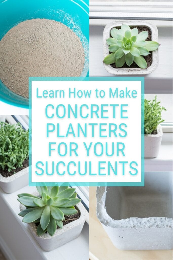 image collage of succulents in planters with text Learn How to Make Concrete Planters for Your Succulents