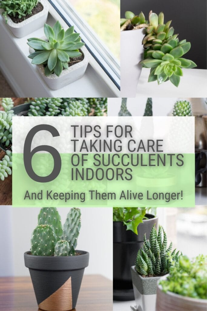 image collage of indoor succulents with text 6 Tips For Taking Care of Succulents Indoors and Keeping Them Alive Longer