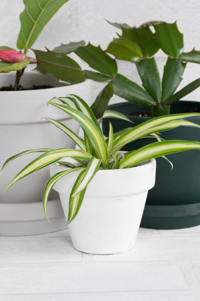 beautiful plants in modern painted terracotta pots