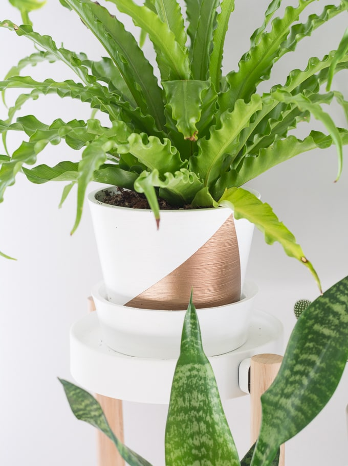One Room Challenge Week 4: Painted pots, gold accents, and lots of greenery!