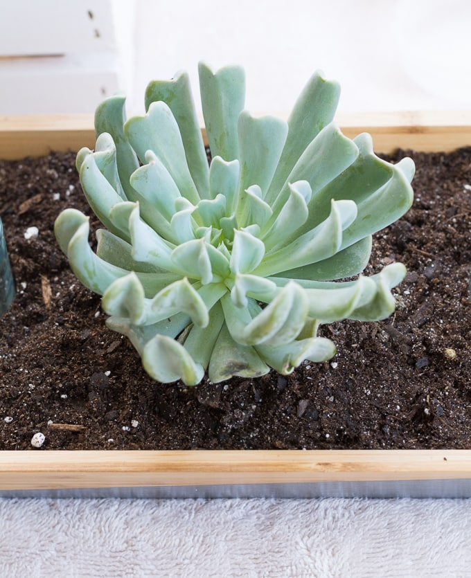 Make a chic and modern Ikea succulent planter