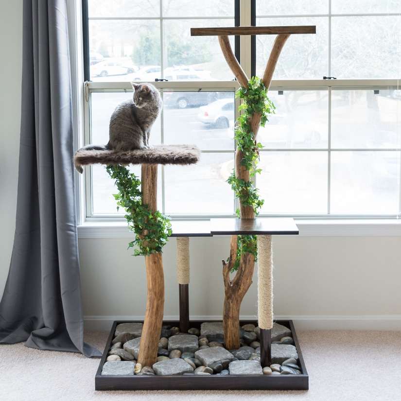 Make a cat tree using real branches.
