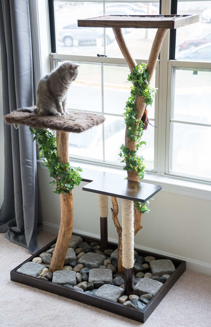 Make a cat tree using real branches my amazing diy cat tree make a cat tree using real branches solutioingenieria Gallery