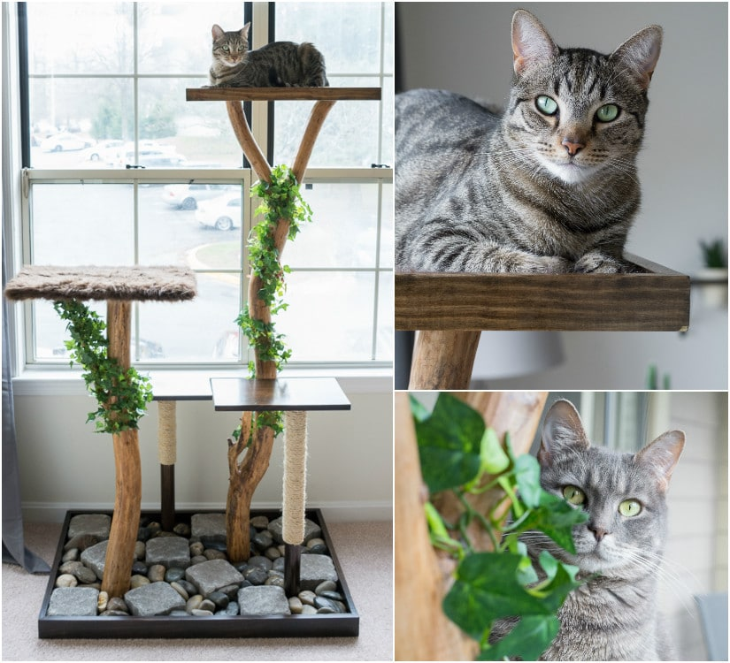 Make a cat tree using real branches my amazing diy cat tree make a cat tree using real branches see how i made this beauty for about solutioingenieria Gallery