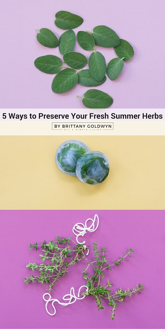 5 ways to preserve your summer herbs to enjoy them all year long
