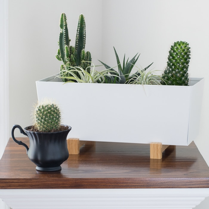 How to plant a succulent in a mug or teacup