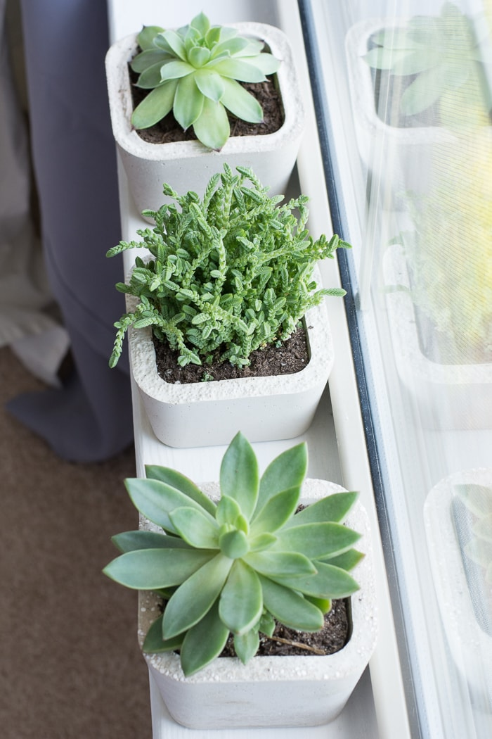 Learn how to make these cute little concrete planters using this lightweight concrete mix!