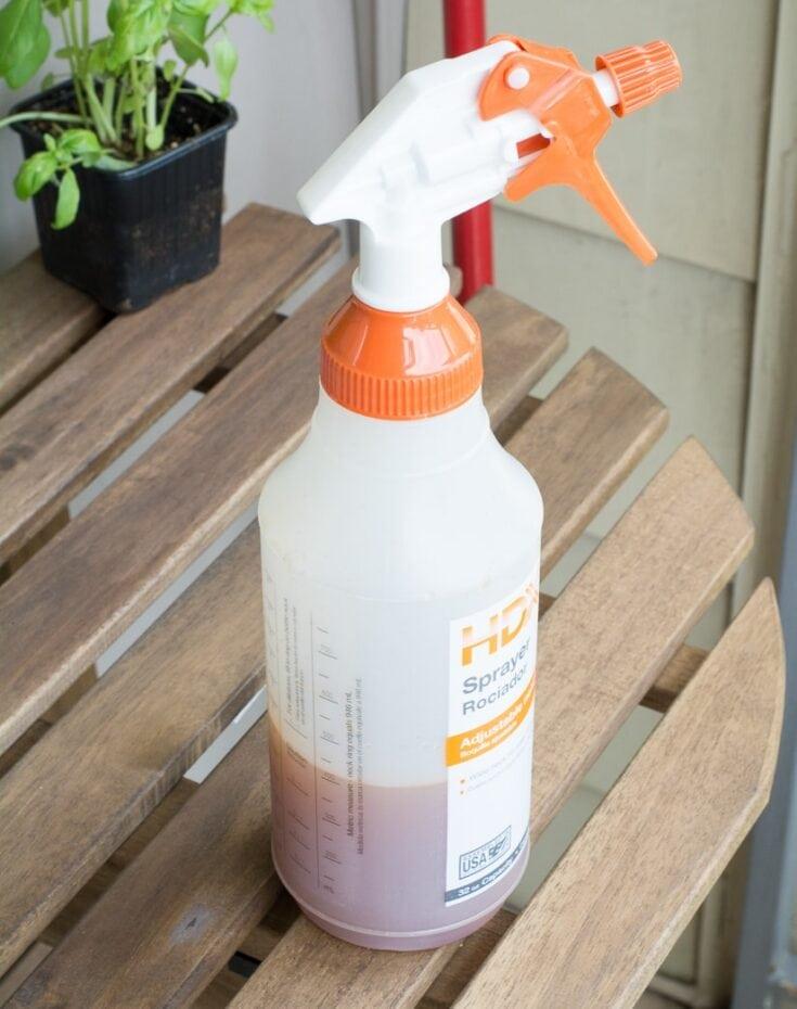 diy squirrel repellant spray