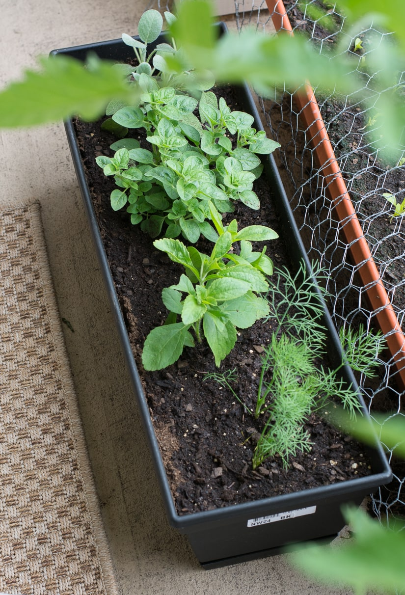 planter box with herbs growing in it