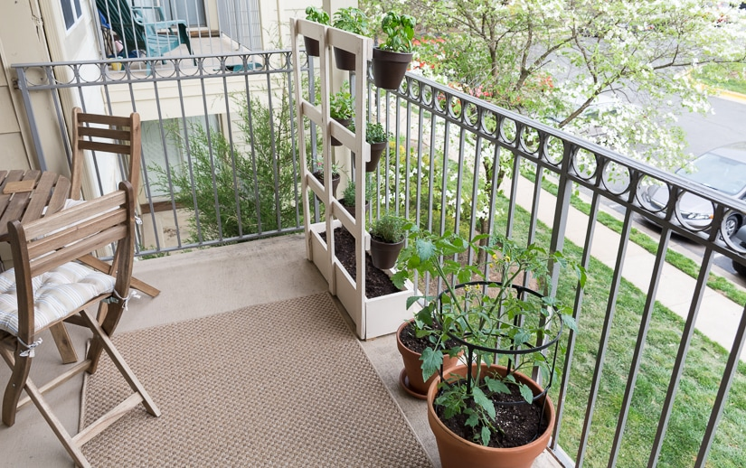 My apartment balcony garden and how to make squirrel repellant spray...the spray uses ingredients from your kitchen!
