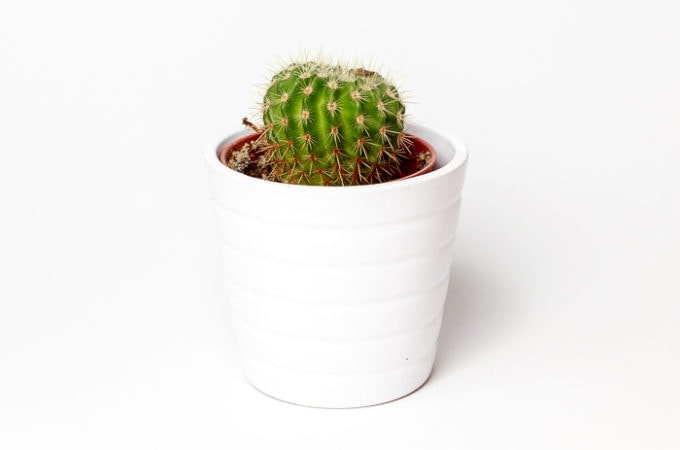 6 Indoor Succulent Care Tips for Plant Killers