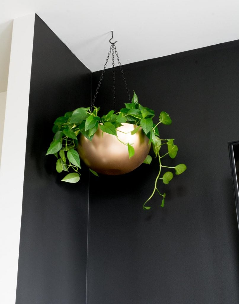 hanging plant from a screw hook in the ceiling