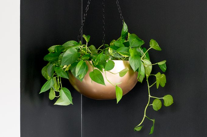 10-Minute DIYs: Stainless Steel Bowl Hanging Planters
