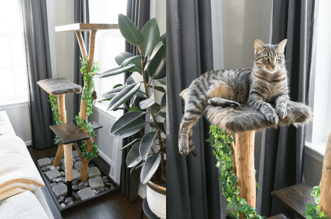 The Cat Tree: An Update