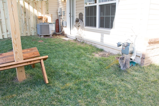My tiny yard: Before and plans
