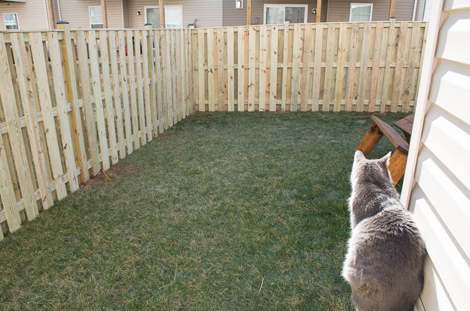 My Tiny Backyard: Before and Plans (ORC Week 1)