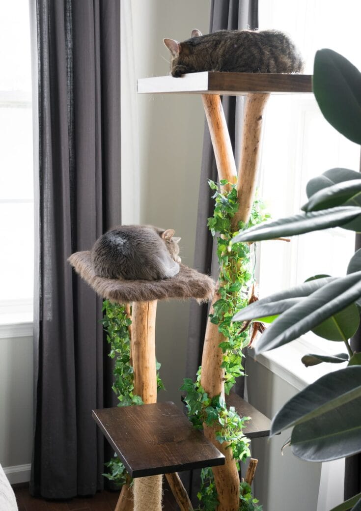 DIY Cat Tree Using a Real Branch