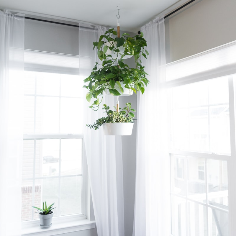 Three hanging planters with beautiful pothos plants
