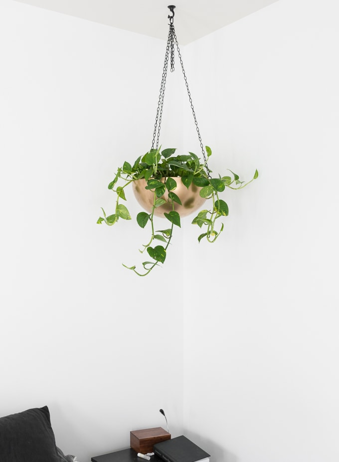 Pothos plant large hanging basket in a bedroom