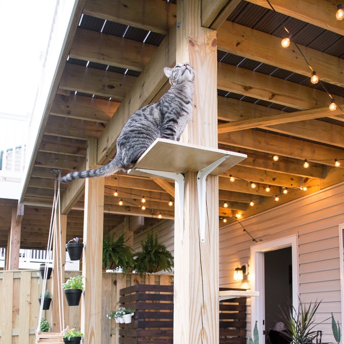 DIY outdoor cat perches