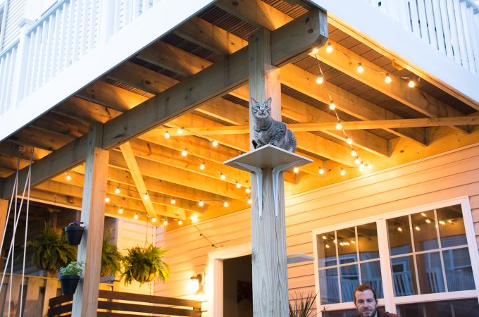 My Tiny Backyard: Lights, Plants, Cats… (ORC Week 5)