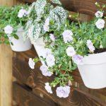 How to Hang Flower Pots