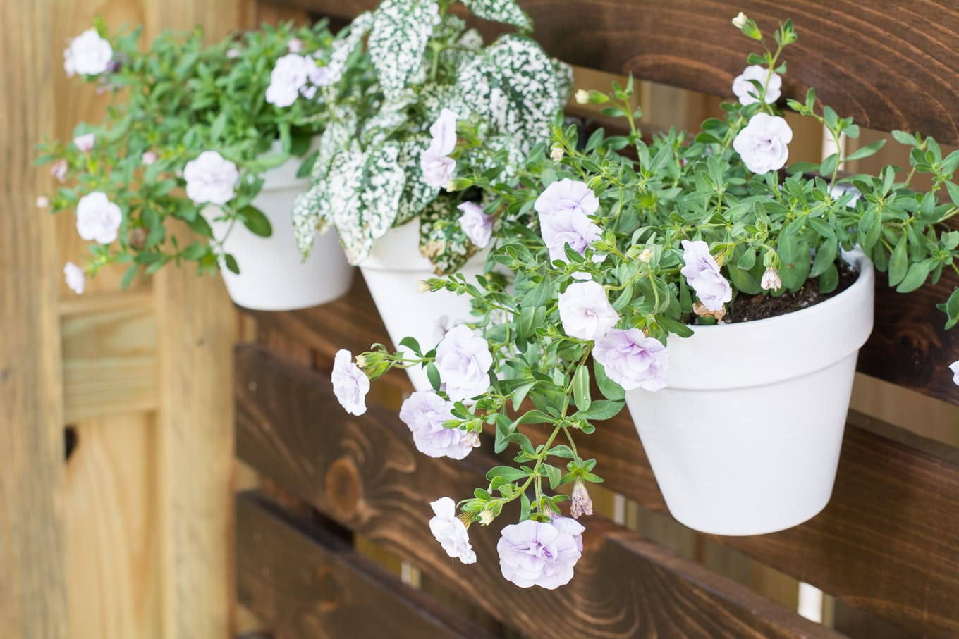 flowers hanging on a fence using pot clips