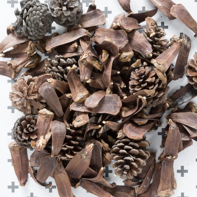 pulling apart pinecone pieces