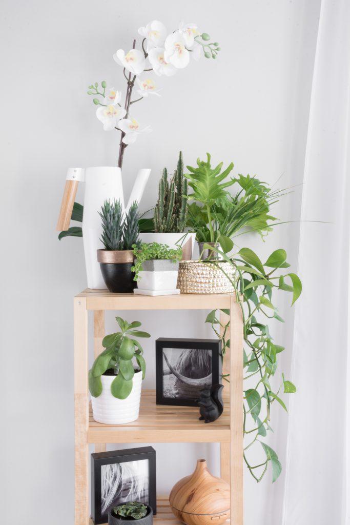 beautiful plant shelving against a Sherwin-Williams Repose Gray wall