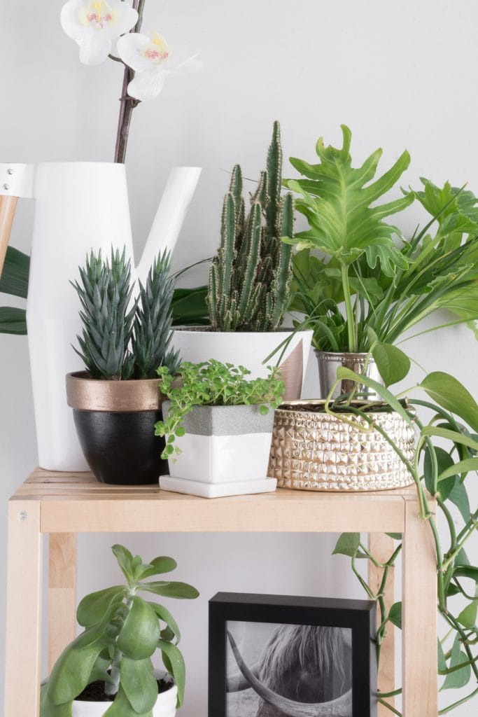 How to take care of succulents indoors