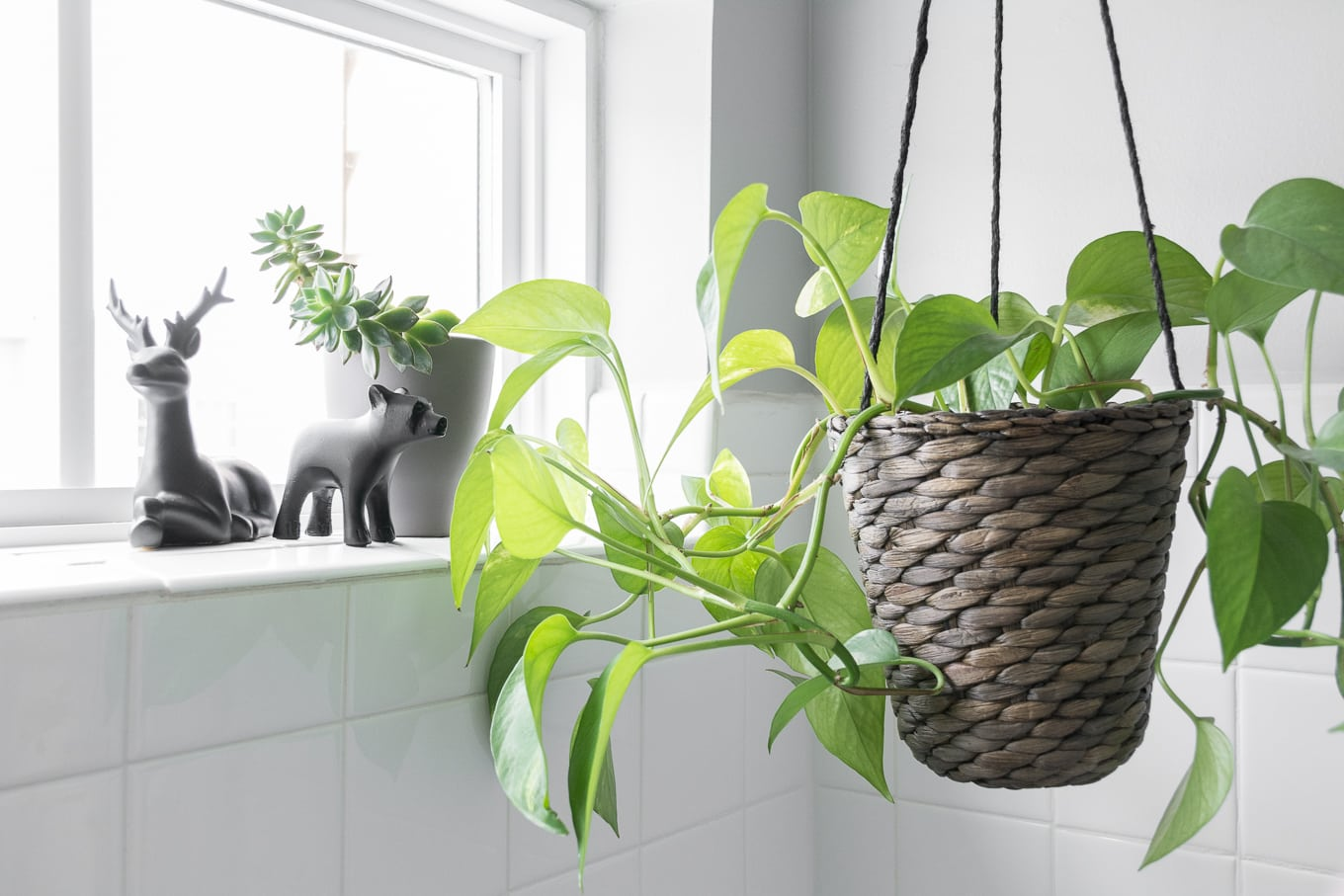 Hanging plant in a bathroom