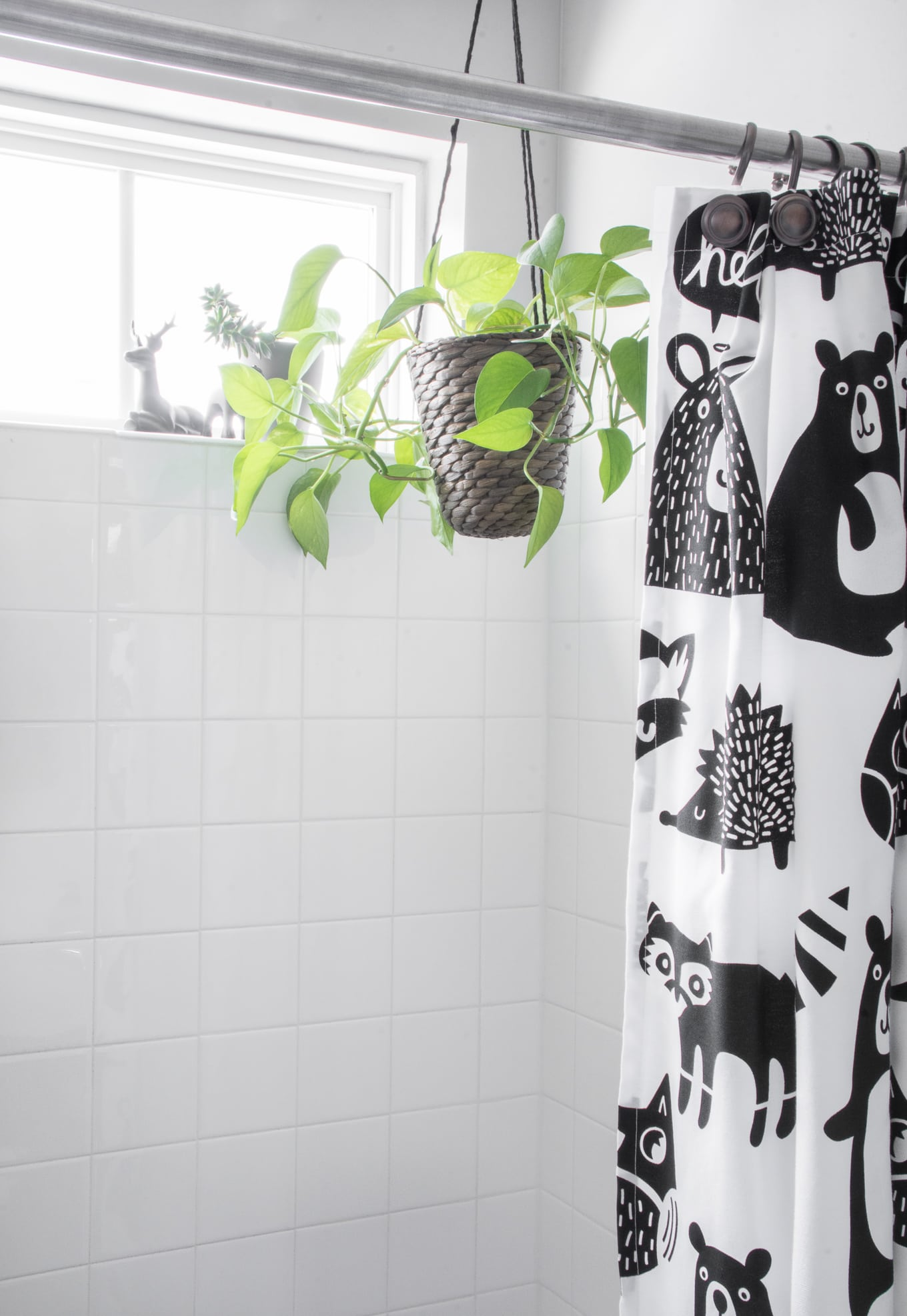 Hanging pothos plant in a bathroom