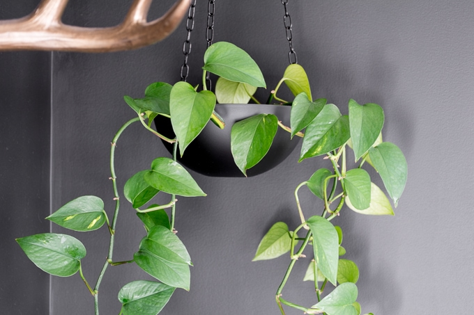 Upcycled thrift store bowl hanging planter