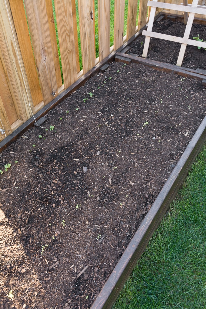 Steps to Prep the Backyard for Spring and Summer