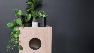Indoor Cat House Plans