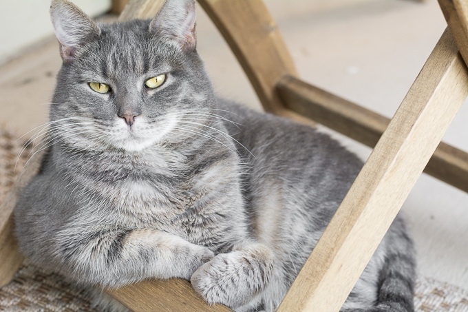 7 Tips to Keep Your Cat Happy and Healthy While Also Keeping Your House Nice