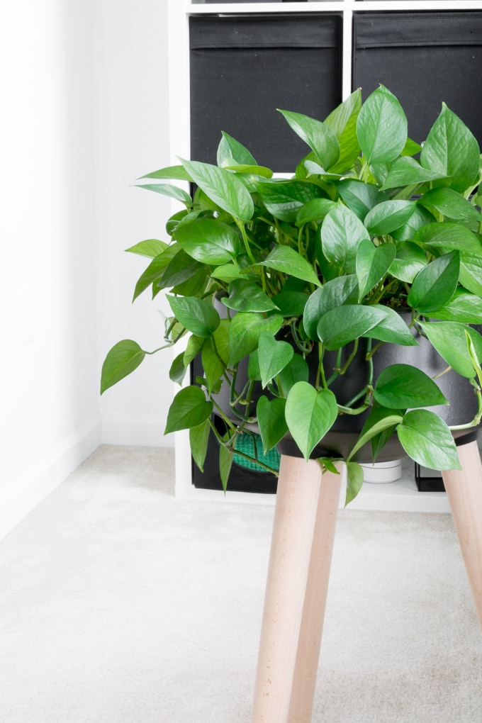 how to care for pothos