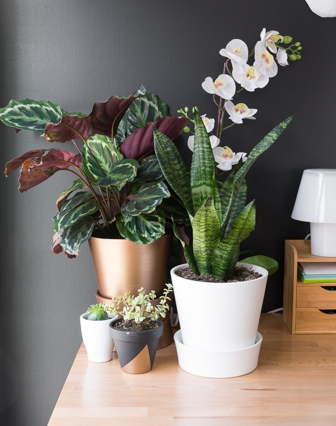 plants on a desk