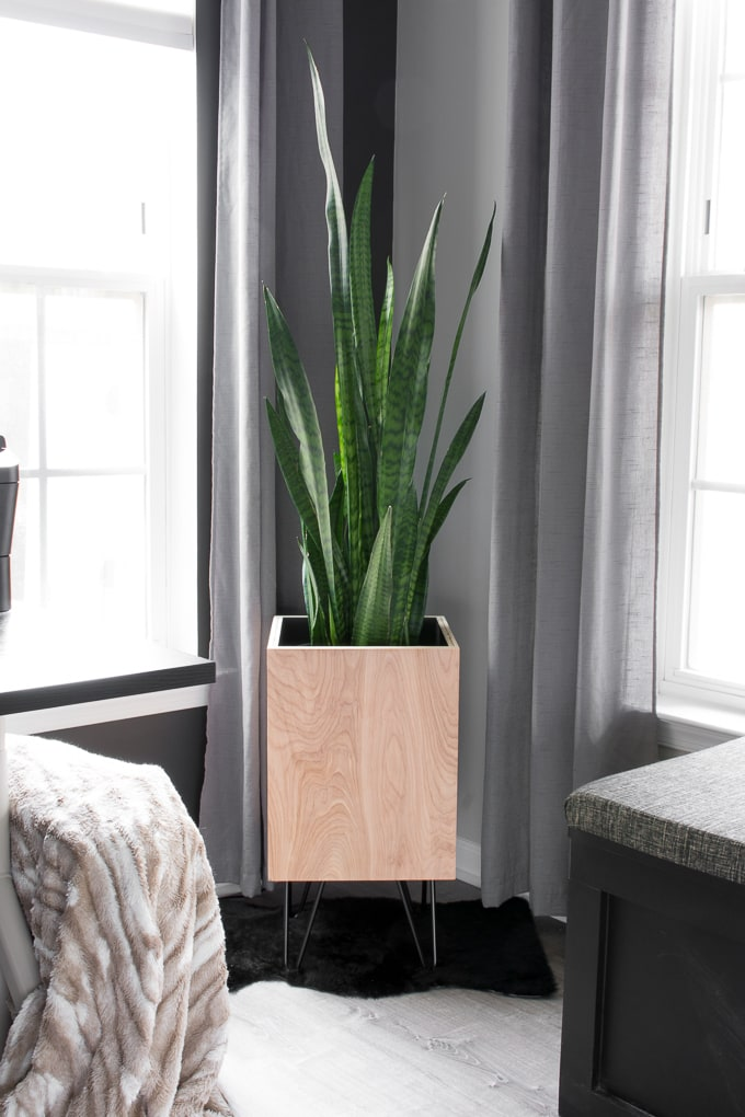 Modern DIY plywood planter with hairpin legs