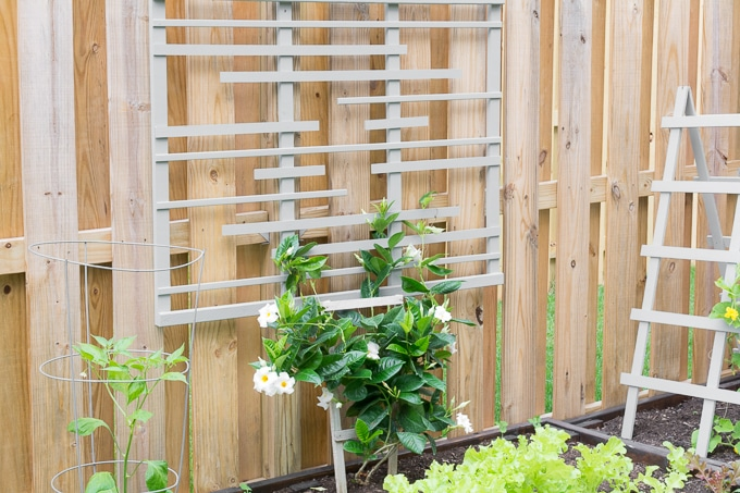 DIY Trellis for Vines
