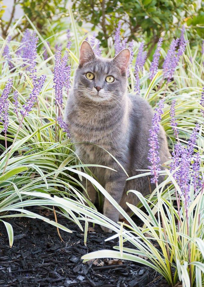 Feline stomatitis treatment steps