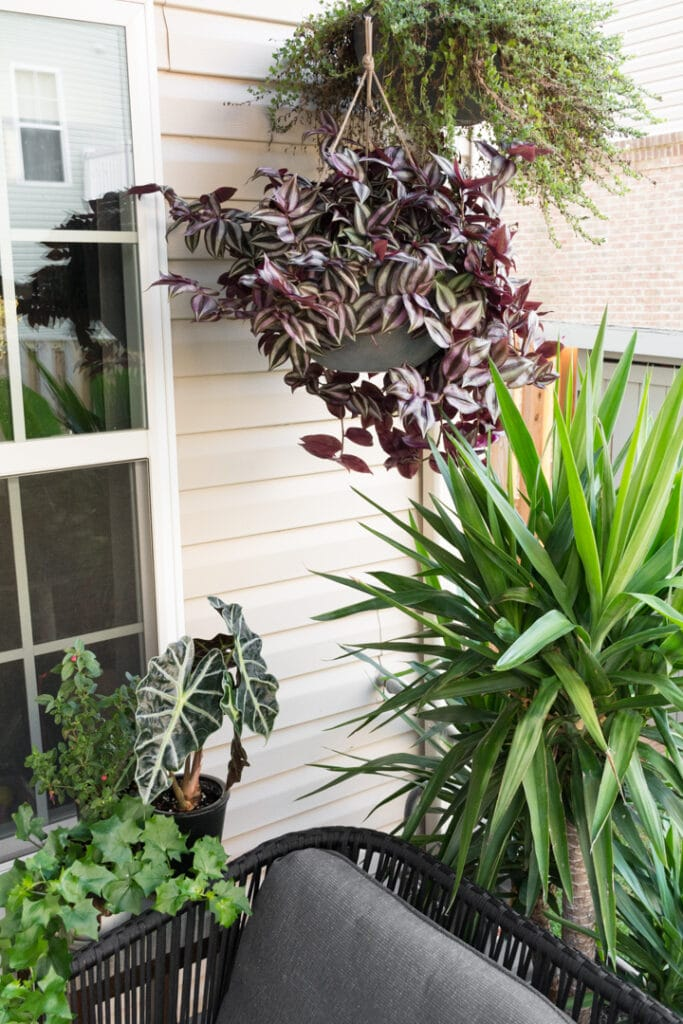 hanging plants in a small townhouse backyard, Modern Minimal Townhome