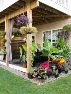 beautiful small backyard with a deck and plants