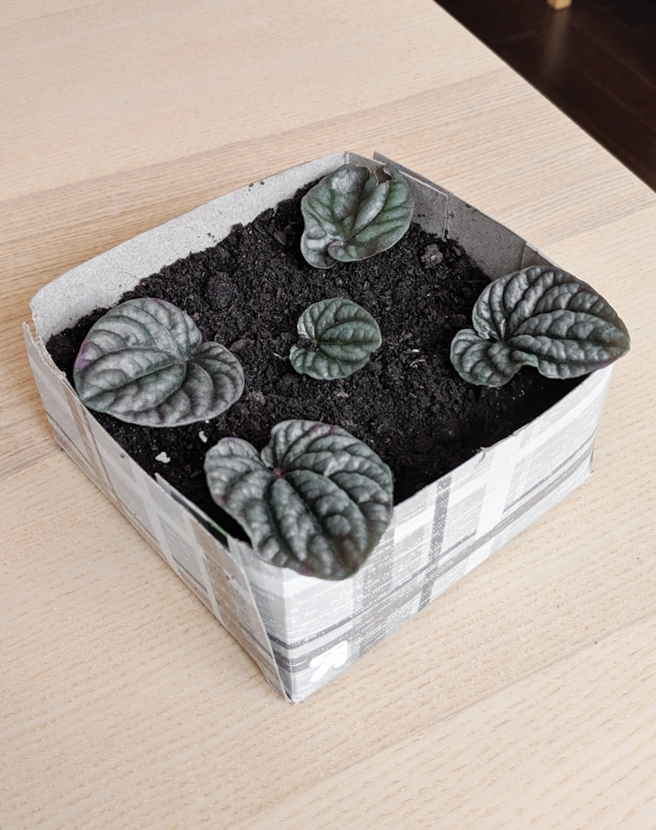 Zero Waste Planters for Propagating Cuttings