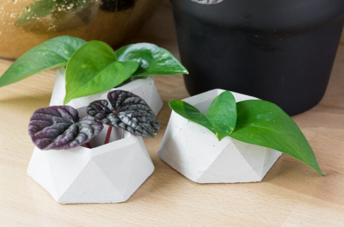 DIY Geometric Concrete Planter Pot