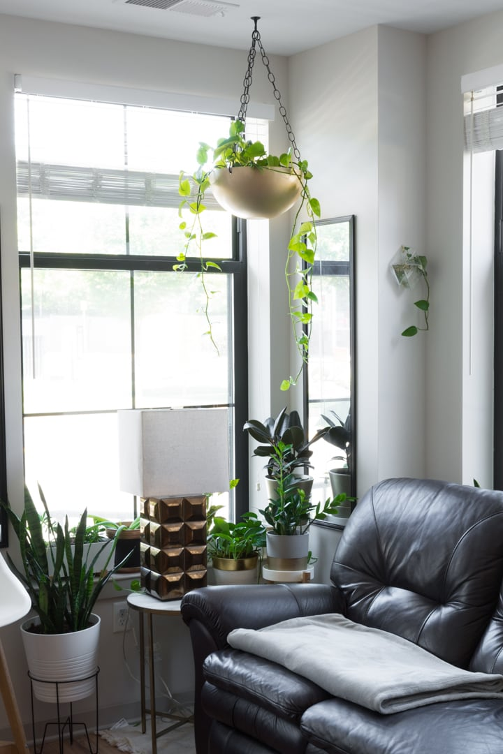 hanging plant in a living room